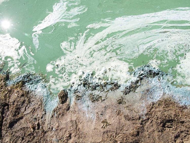 Blaualgen am sandigen Ufer   Foto: Region Hannover