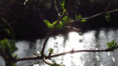 Bild von Der Frühling ist da