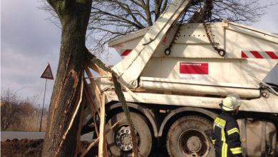 Bild von Müllwagen schreddert Baum
