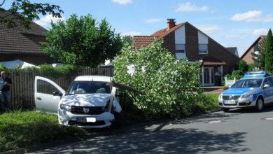 Bild von Autofahrerin fällt Kastanienbaum nach Wespenstich