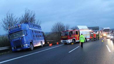 Bild von Wie die Feuerwehr den Rindertransporter-Unfall managte