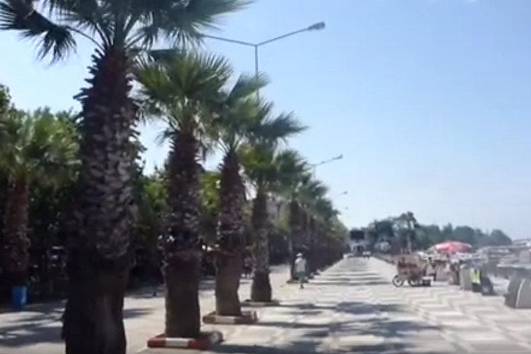 Die ersten Palmen auf der Reise