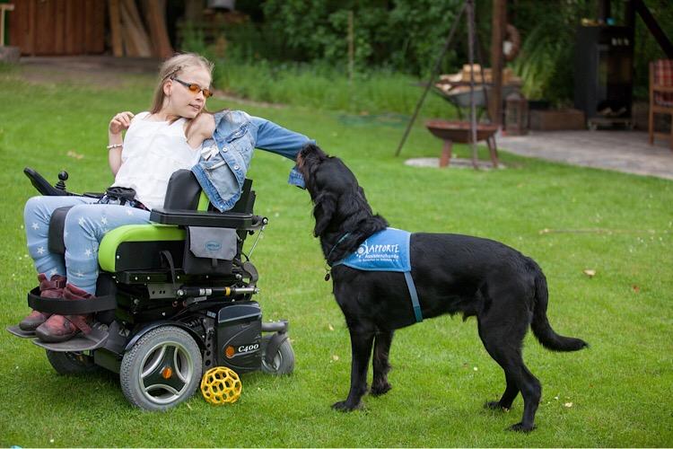 Apporte Assistenzhunde für Menschen im Rollstuhl - Bild 4