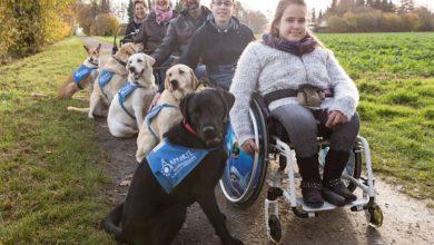 Bild von Besondere Helfer auf vier Pfoten für Menschen im Rollstuhl