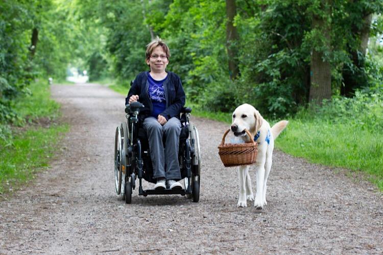 Apporte Assistenzhunde für Menschen im Rollstuhl - Bild 1