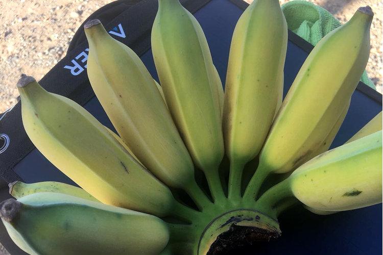 Banenenpracht