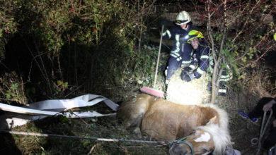 Bild von Pferdeunfall in Sachsenhagen