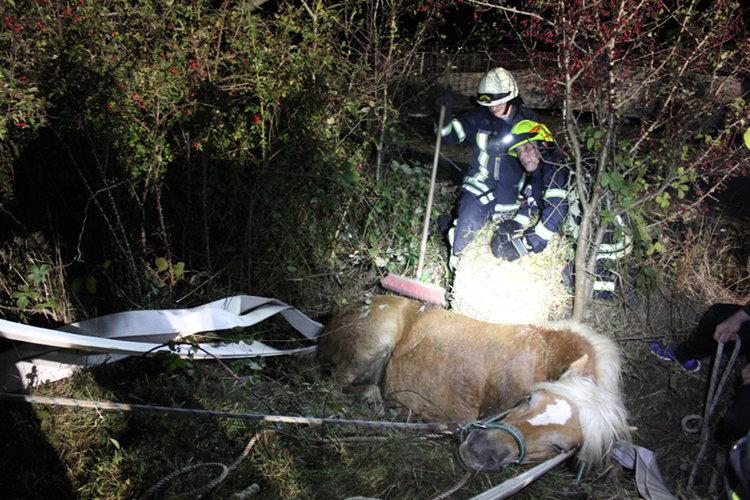 Tierrettung der Feuerwehr