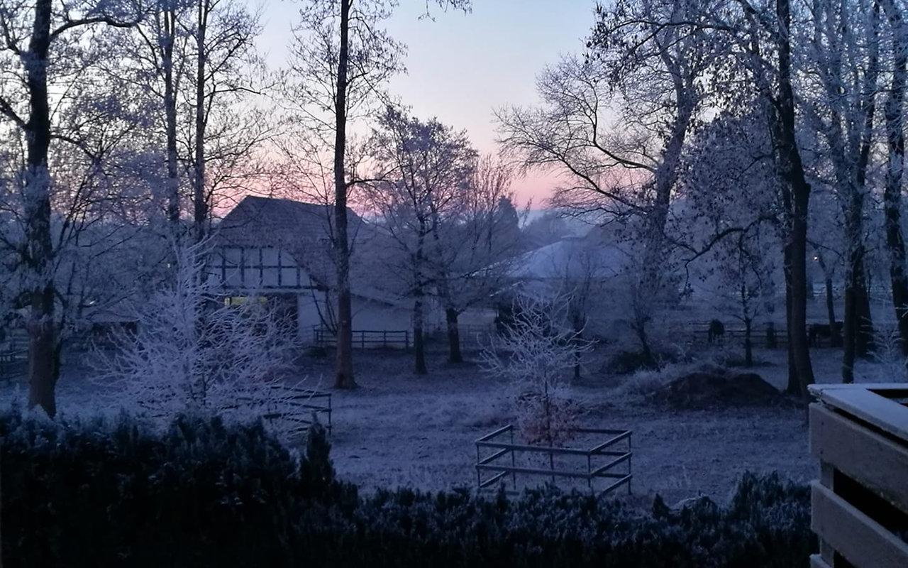 Eisiger Märchenwald