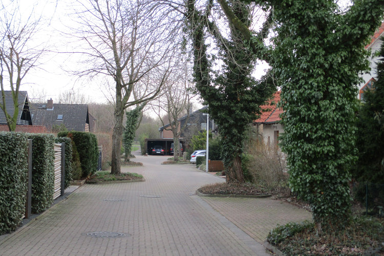 Bäume in Anwohnerstraße