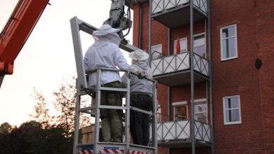 Bild von Rettungsaktion für verirrten Bienenschwarm