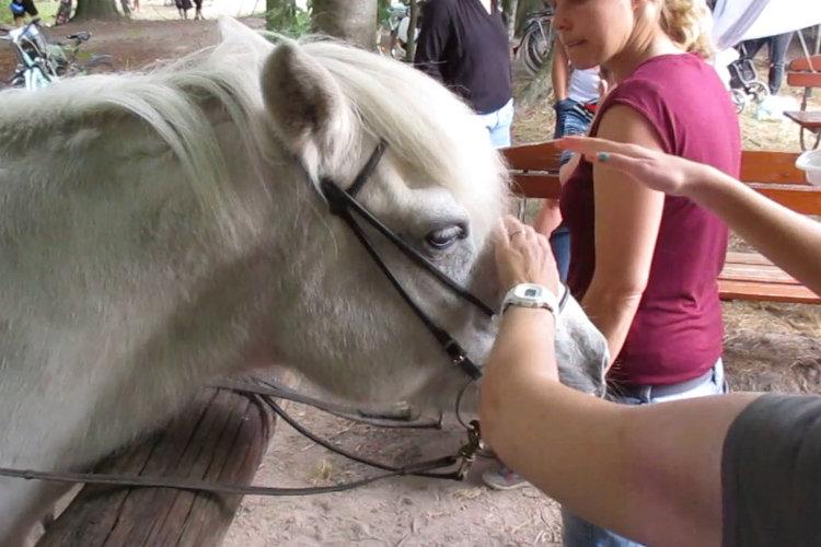 Pferdestation