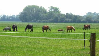 Bild von Pferdediebe verletzen Tier schwer