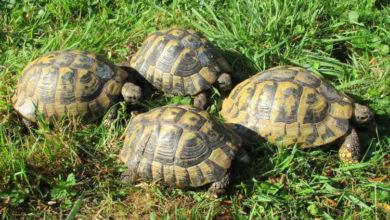 Bild von Wer hat die Schildkröten ausgesetzt?