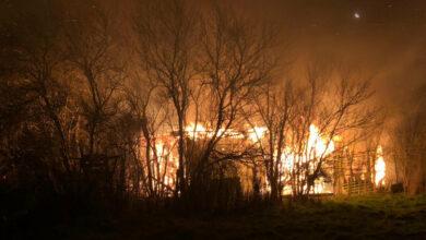 Bild von Feuer erfasst Laubenkolonie in Steinhude