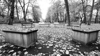 Bild von Kommunikationszentrum im Bürgerpark
