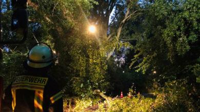 Bild von Feuerwehr sichert Baum am Blumenauer Kirchweg