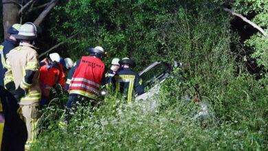 Bild von Autofahrer stirbt nach Kollision mit Wolf