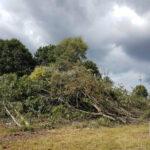 Baumfällungen Bokeloh