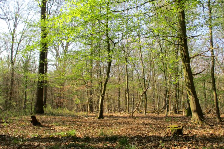 Waldstück in Wunstorf