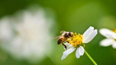 Bild von Grüne unterstützten Volksbegehren zur Rettung der Artenvielfalt