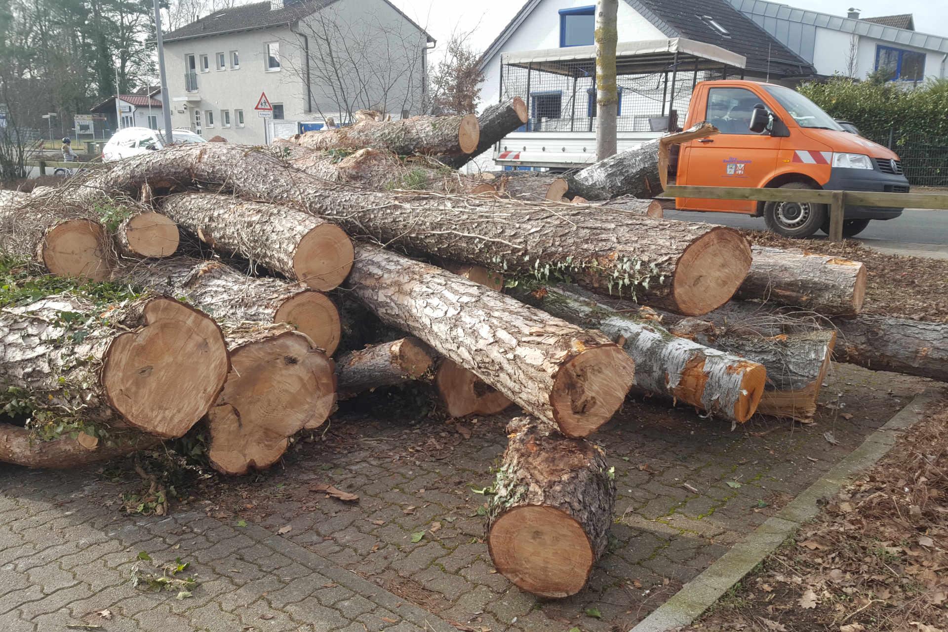 Baumfällungen Steinhude