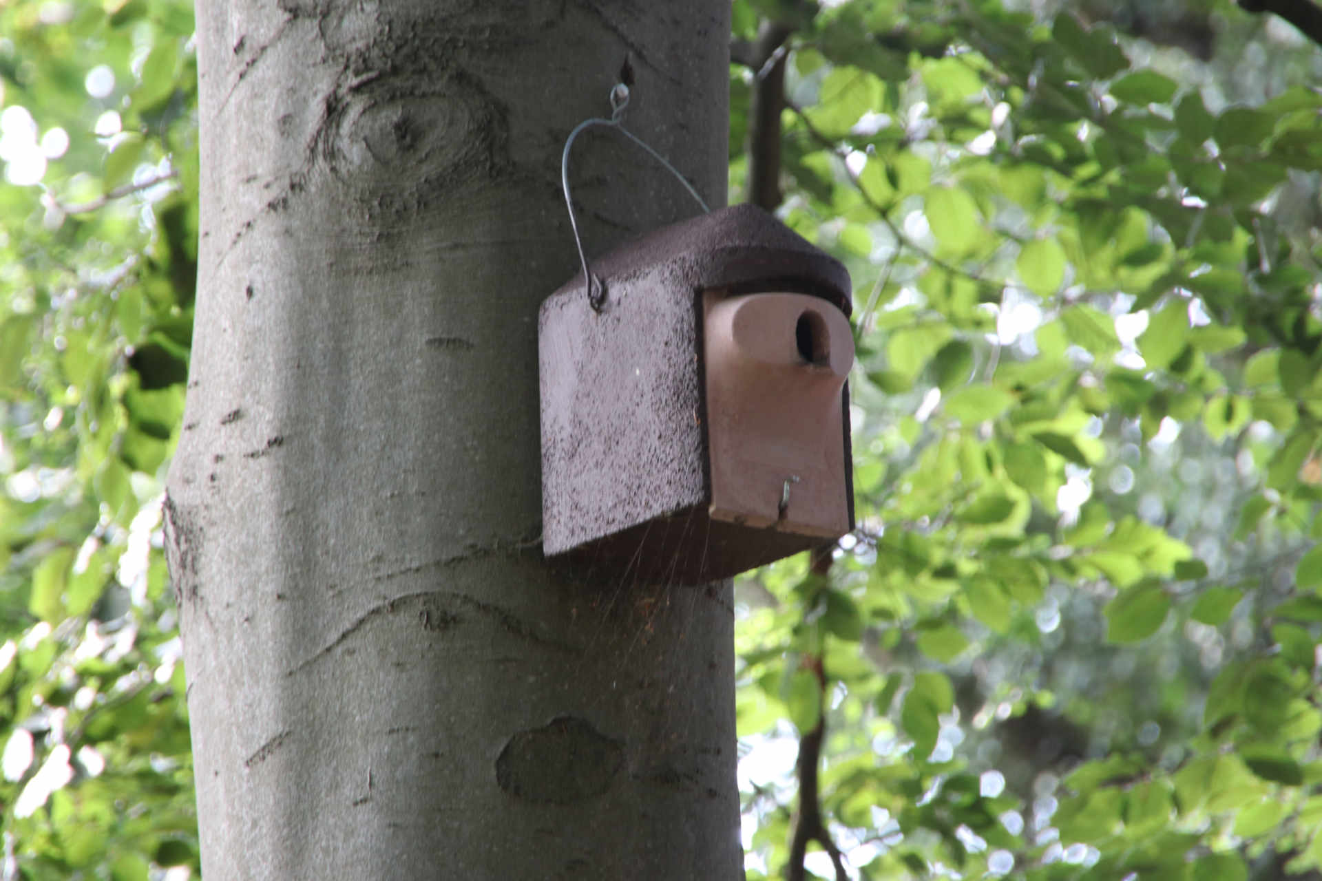 Nistkasten an Baum